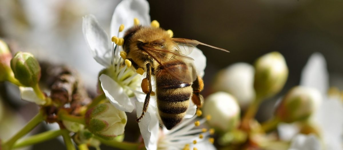 apiculture normandie