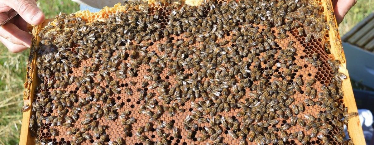 stage apiculture nord picardie