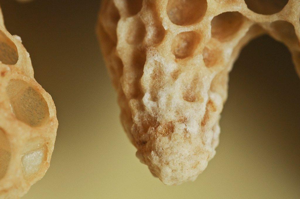 Cellule royale qui contient la larve d'une future reine d'abeilles